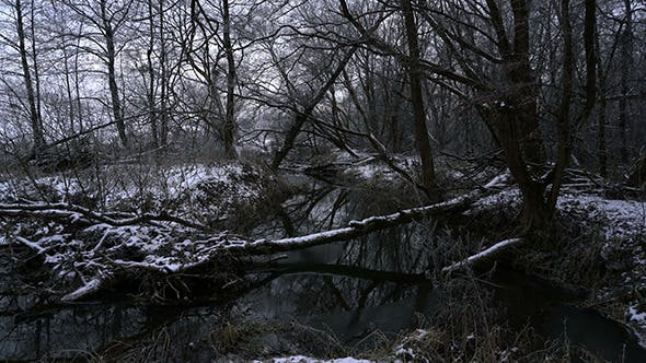 Thumbnail for River Flowing through Winter Forest