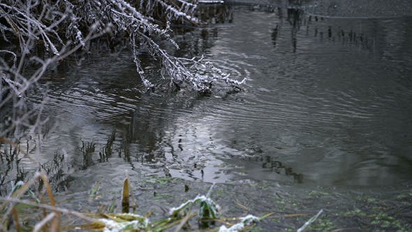 Thumbnail for River Flowing thru Winter Forest