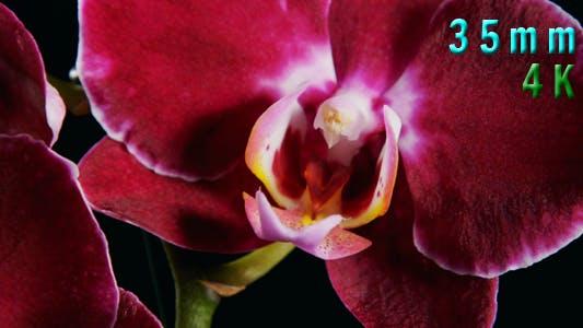 Purple Orchids Flower 01