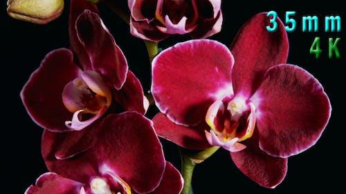 Purple Orchids Flower 02