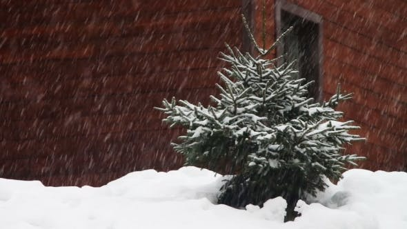Thumbnail for The Snow Is Falling And Christmas Tree.