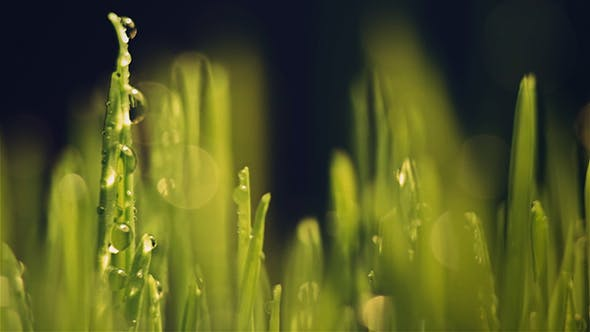 Cover Image for Grass on a Sunny Day