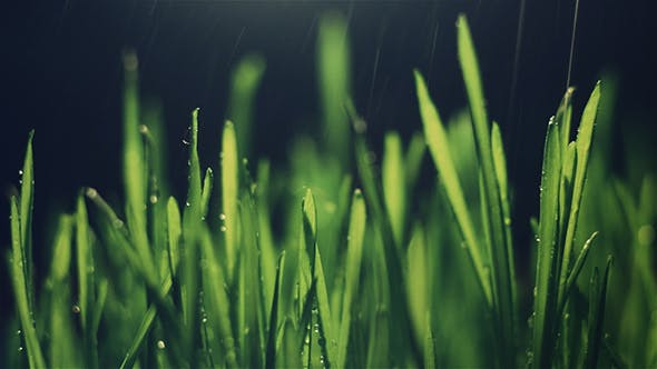 Thumbnail for Grass with Rain