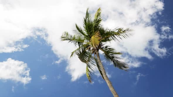 Thumbnail for Palm Tree Over Blue Sky With White Clouds 3