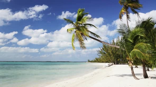 Thumbnail for Tropical Beach With Palm Trees And Boat 1
