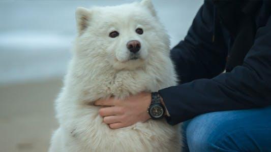 Northern Dog