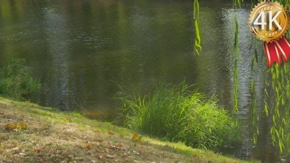 Thumbnail for Kleine flache Fluss Wasser fließt Rippling Wasser