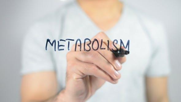 Thumbnail for Metabolism