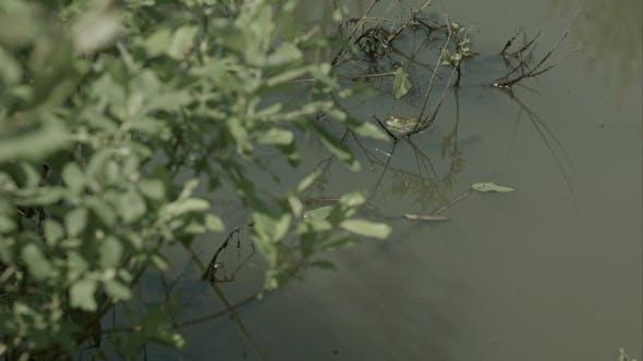 Wetland Area With Aquatic Plants, Swamp Vegetation