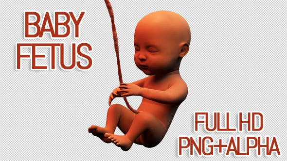 Thumbnail for Baby Fetus