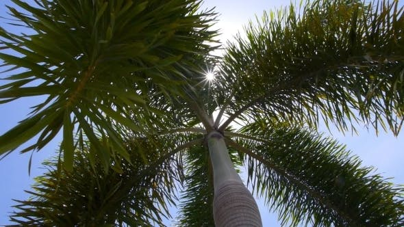 Thumbnail for Coconut Palm Tree And Bright Tropical Summer Sun