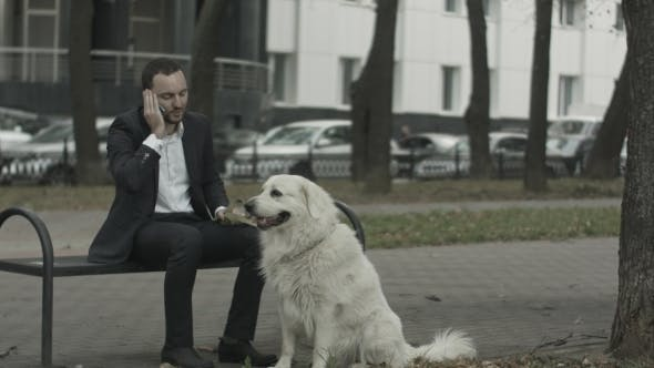 Thumbnail for Business Man Talking By Phone, Big White Dog