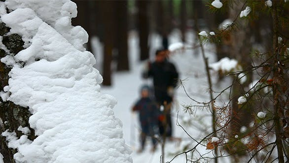 Cover Image for Winter Forest