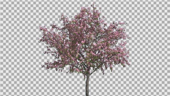 Thumbnail for Peach ThinTrunk Tree Green Leaves Pink Flowers
