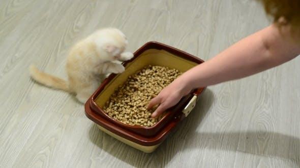 Thumbnail for Woman Teaches The Kitten To Toilet