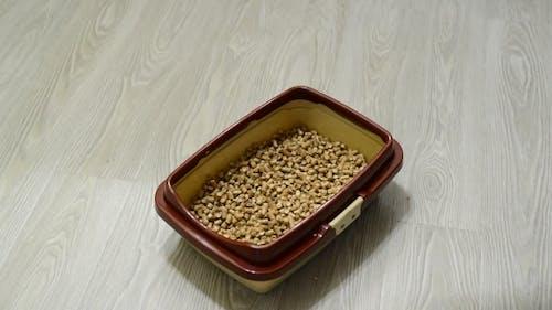 Füllstoffe für Katzenstreu in Tablett gestreut