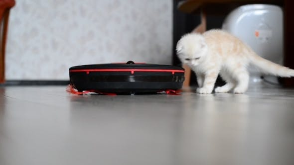 Thumbnail for Kitten Plays With a Robot Vacuum Cleaner