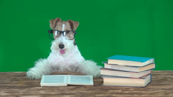 Thumbnail for School Dog with Books. Green Screen