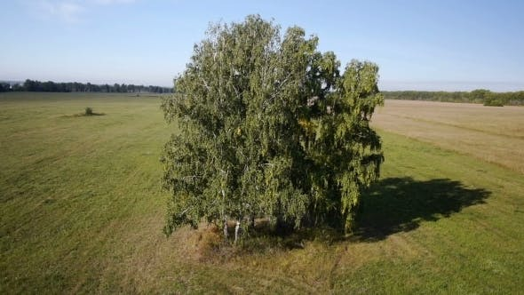 Thumbnail for Aerial: Flight Over Beautiful Green Tree