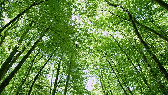 Panning Shot Of Trees In Forest