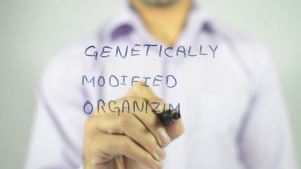 Thumbnail for Genetically Modified Organism, GMO