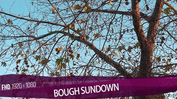 Bough Sundown