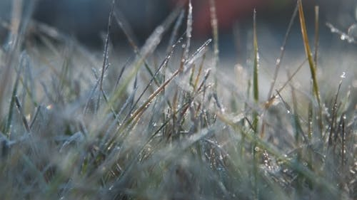 The Female Hand Touches To a Frosty Grass On a