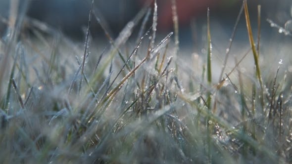 Thumbnail for The Female Hand Touches To a Frosty Grass On a