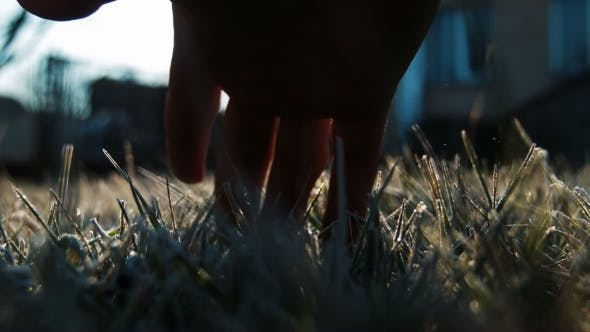 Thumbnail for The Male Hand Touches To a Frosty Grass
