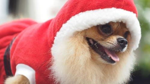 Hund im Weihnachtsmann-Kostüm