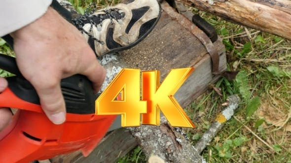 Thumbnail for Man Pruning Branch With A Small Saw