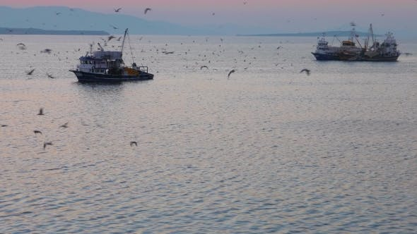 Thumbnail for Fishing Trawlers Surrounded By Many Birds In The