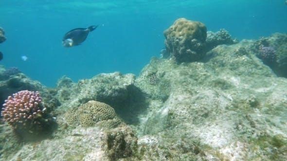 Coral Reef Dwellers In Red Sea