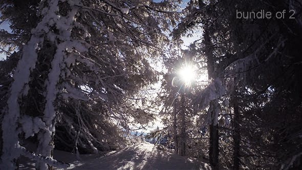 Thumbnail for Sunshine Through the Trees in Winter