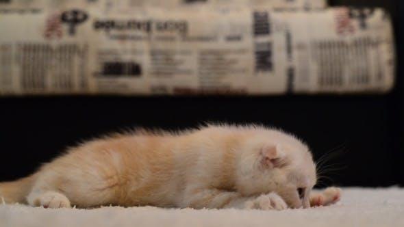 Thumbnail for Kitten Sucks The Carpet Before Bedtime