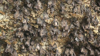 Bats' place