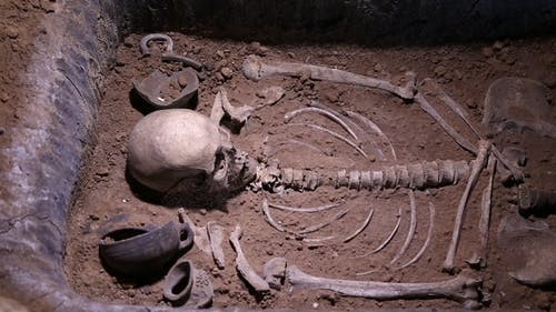Human Skeleton, Skull, Bones, Excavated a Burial