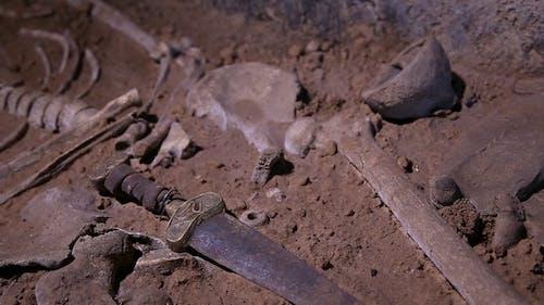 Menschliches Skelett, Schädel, Knochen, Ein Begräbnis ausgegraben