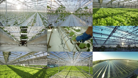 Thumbnail for Agriculture Industrial Greenhouse Pack