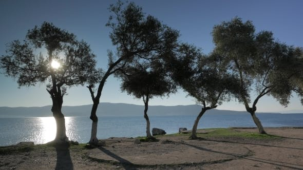 Thumbnail for Sea View Through The Olive Trees Glowing In Sunset