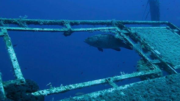 Thumbnail for Divers Exploring Zenobia Shipwreck
