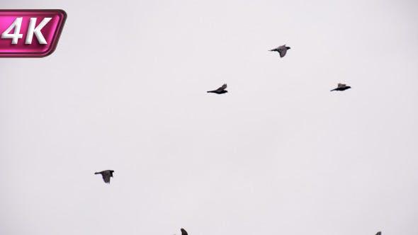Birds Soar Into the Cloudy Sky