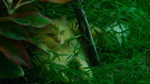Thumbnail for Cat Hide
