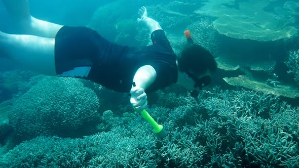 Thumbnail for Snorkeler Diving Along Coral