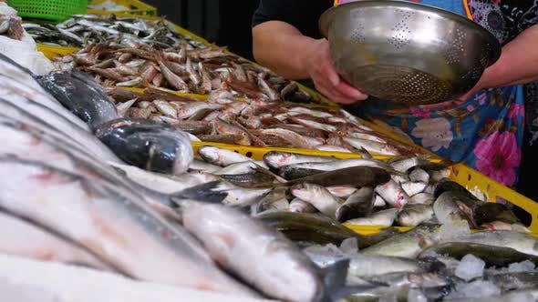 Thumbnail for Saleswoman Sells Fresh Marine Fish in Ice at a Street Fish Market. Showcase of Seafood Shop