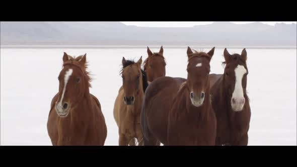 Thumbnail for Slow motion wide screen of horses running with cowboy