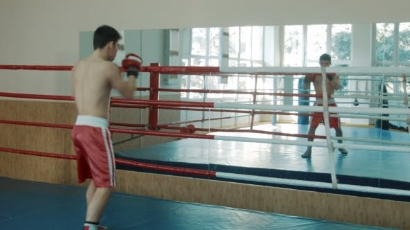 Thumbnail for The Young Boxer Trains On a Ring