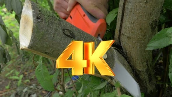 Thumbnail for Electric Power Saw Cutting Off Tree Brunch