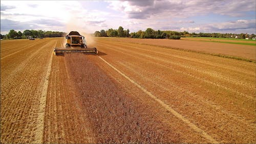 The yellow Harvester Doing Another Rounds of Harvesting
