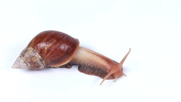 Snail Crawls